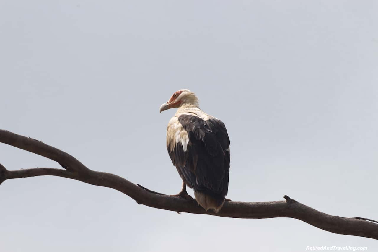 Shimba Hills Eagle - First Sight of African Animals.jpg
