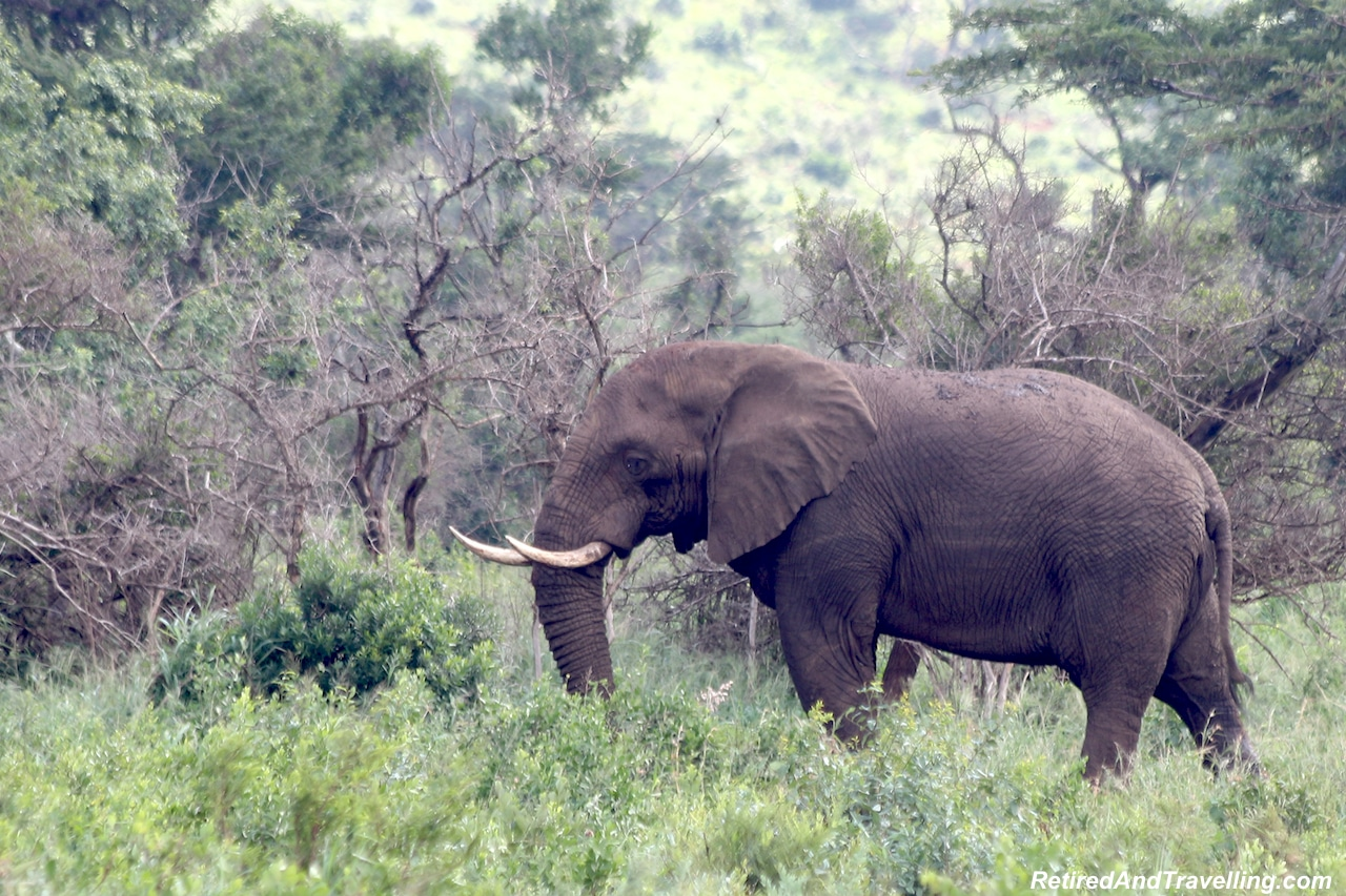 African Elephants - Hluhluwe Game Reserve - Big Five in South Africa.jpg