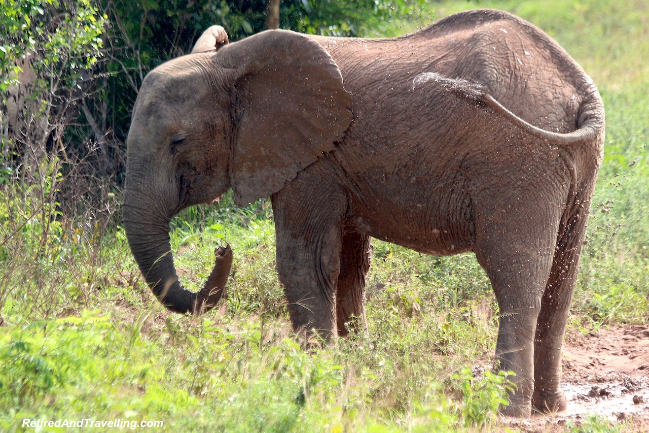 Elephants in Shimba Hills - First Sight of African Animals.jpg