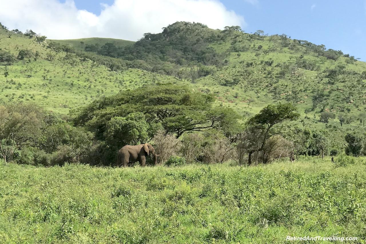 African Elephants - Hluhluwe Game Reserve - Big Five in South Africa.jpg
