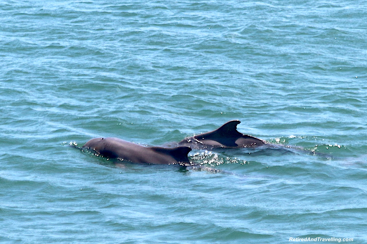 Dolphins in Richards Bay - Big Five in South Africa.jpg