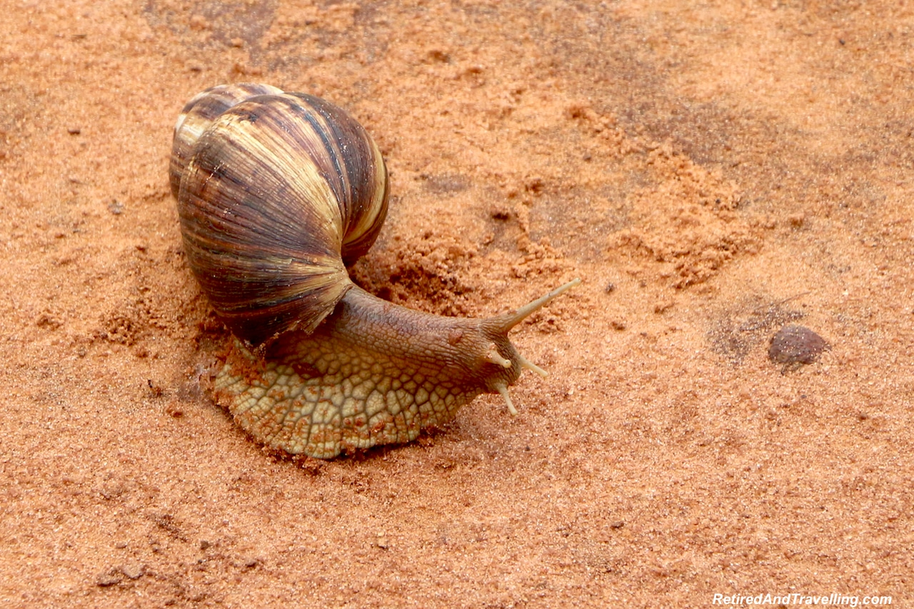 Snails in Shimba Hills - First Sight of African Animals.jpg