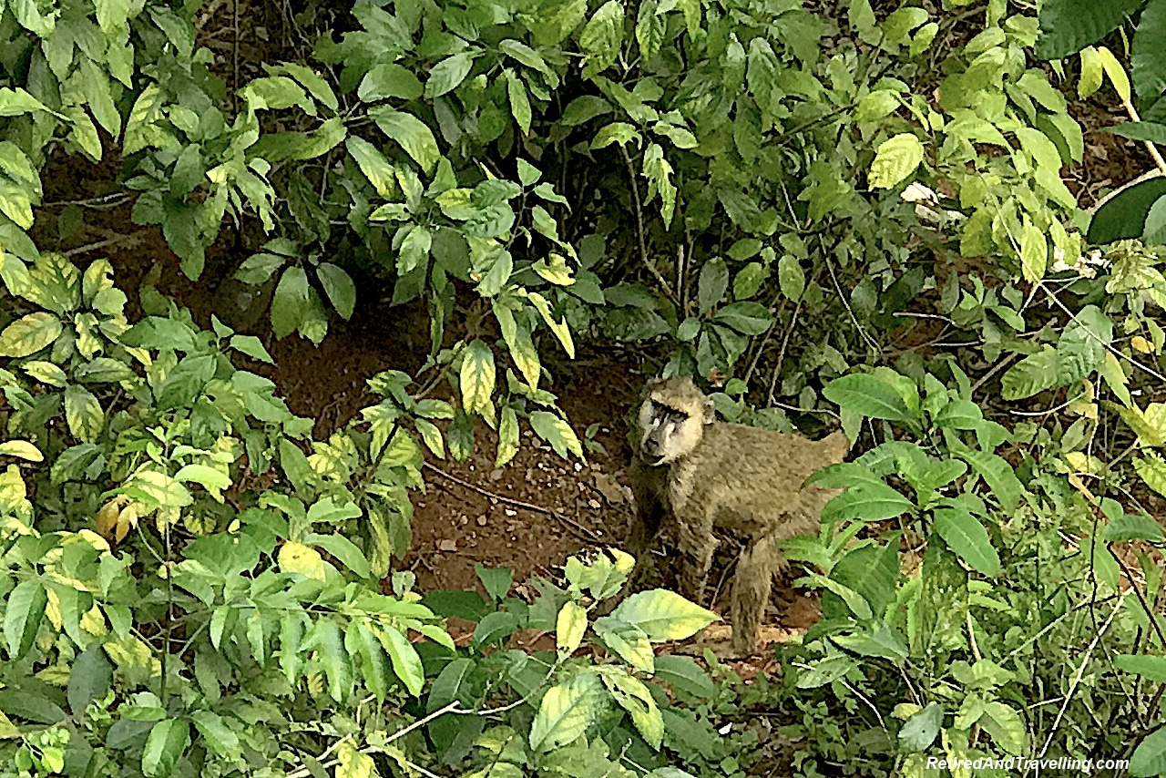 Shimba Hills Lodge Monkey - First Sight of African Animals.jpg