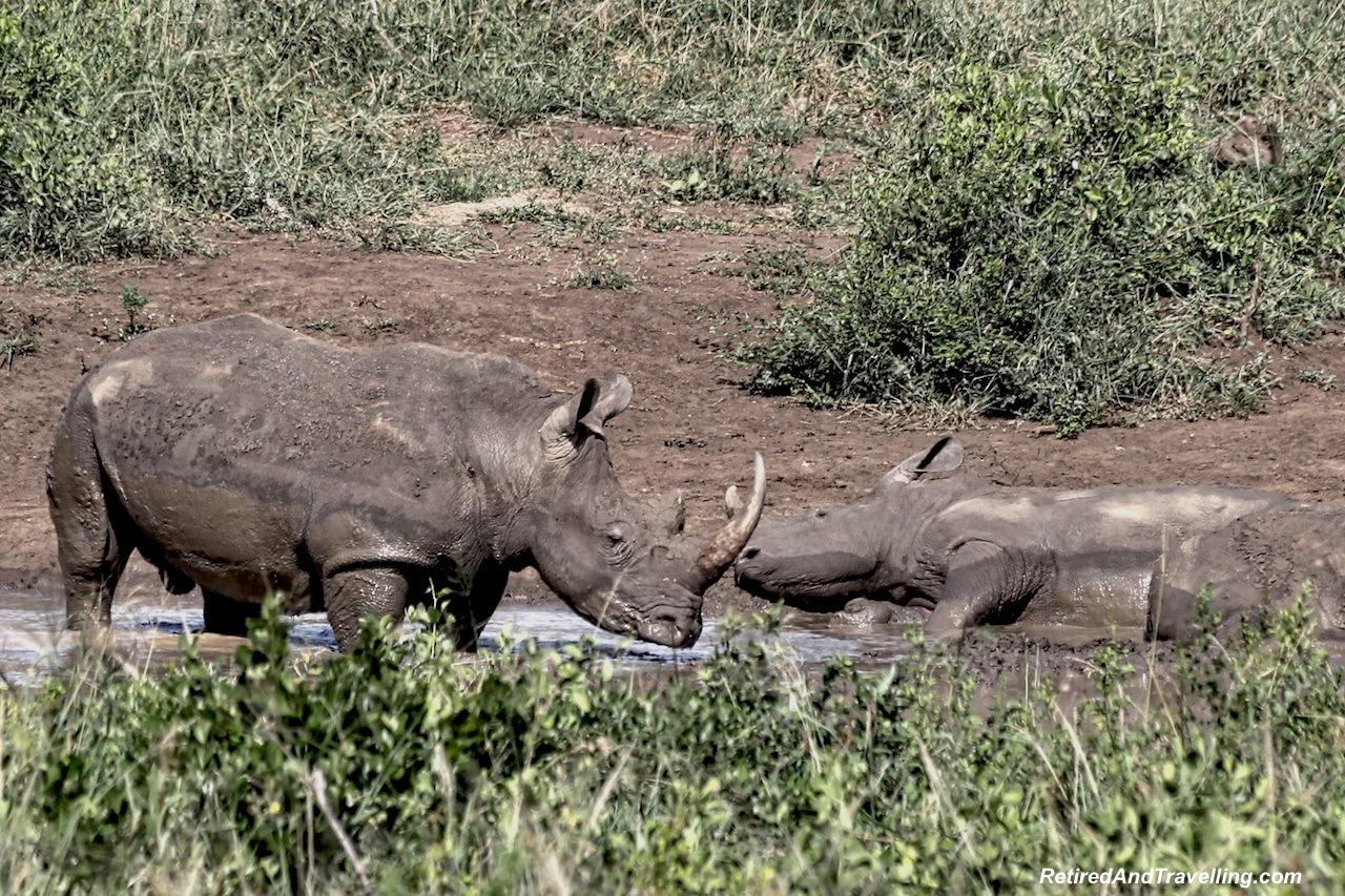 White Rhinos - Hluhluwe Game Reserve - Big Five in South Africa.jpg