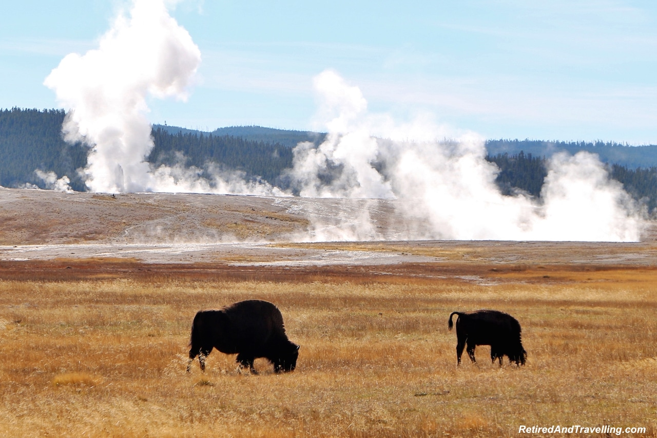 Yellowstone Geysers and Buffalo - National Parks trip.jpg