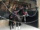 Andalusian Horse Show In Córdoba.jpg