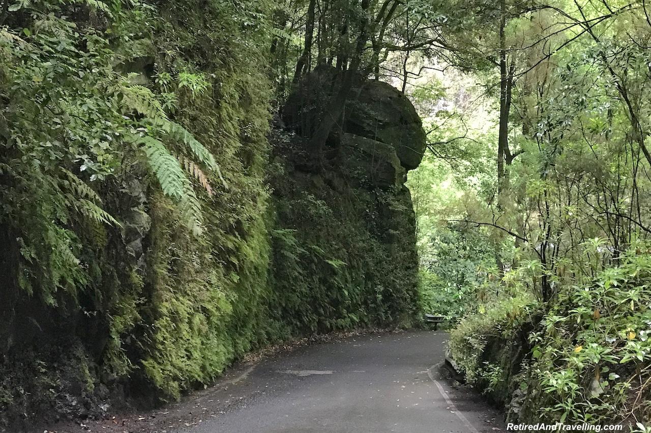 Los Tilos Biosphere - Green and Lush La Palma.jpg