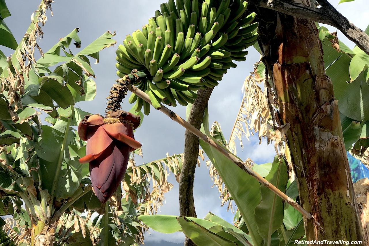 San Andres Banana Plantation - Green and Lush La Palma.jpg