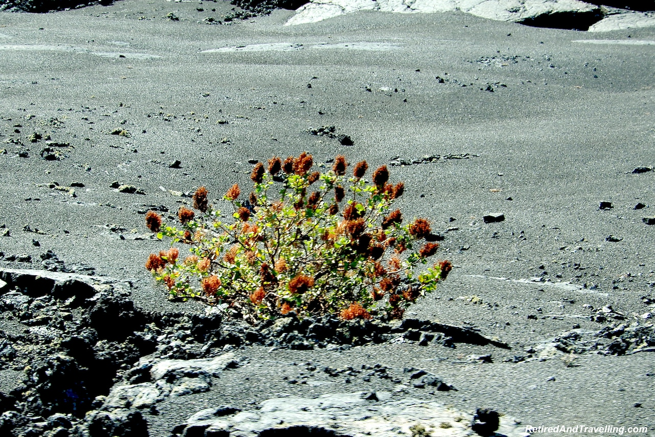 Timanfaya National Park Flora - Colours Of Lanzarote.jpg