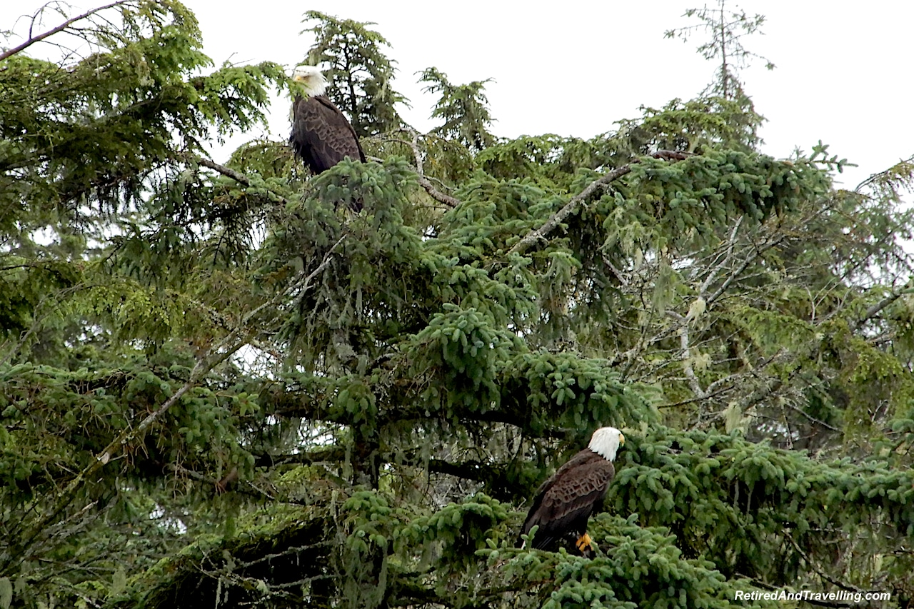 Eagles on Sea Otter Express Boat Trip - Visit Sitka in Alaska.jpg