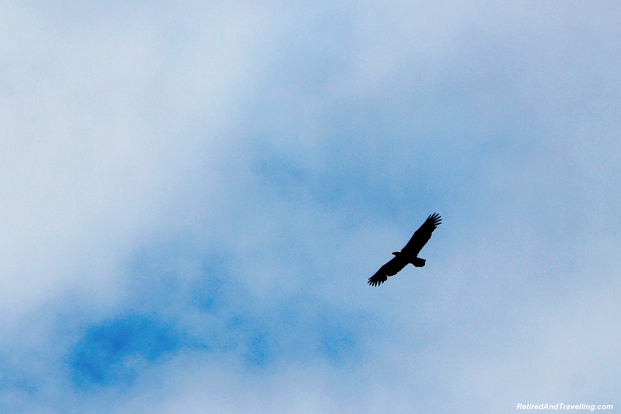 Eagles on Boat Transit - A Rainforest Excursion in Ketchikan.jpg