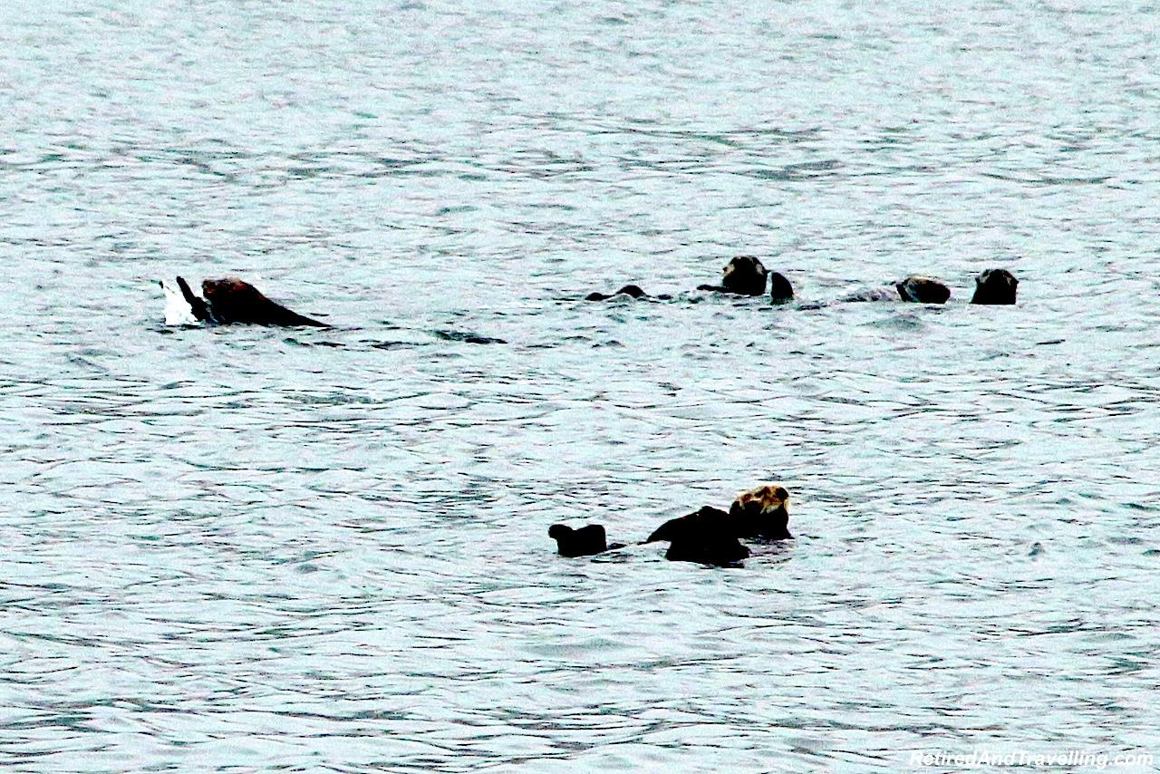 Sea Otter Express Boat Trip - Visit Sitka in Alaska.jpg