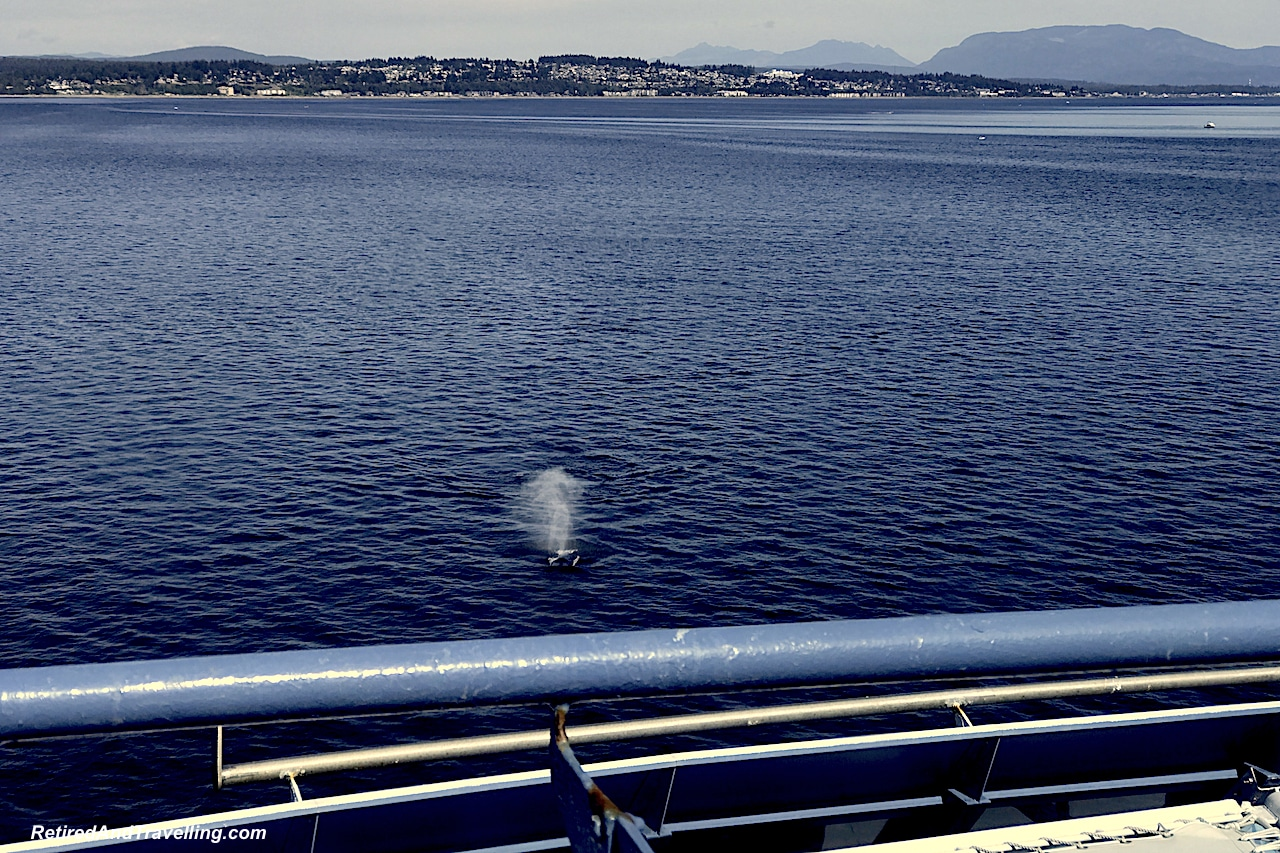 Whales Cruising the Inner Passage - Alaska Cruise From Seattle.jpg