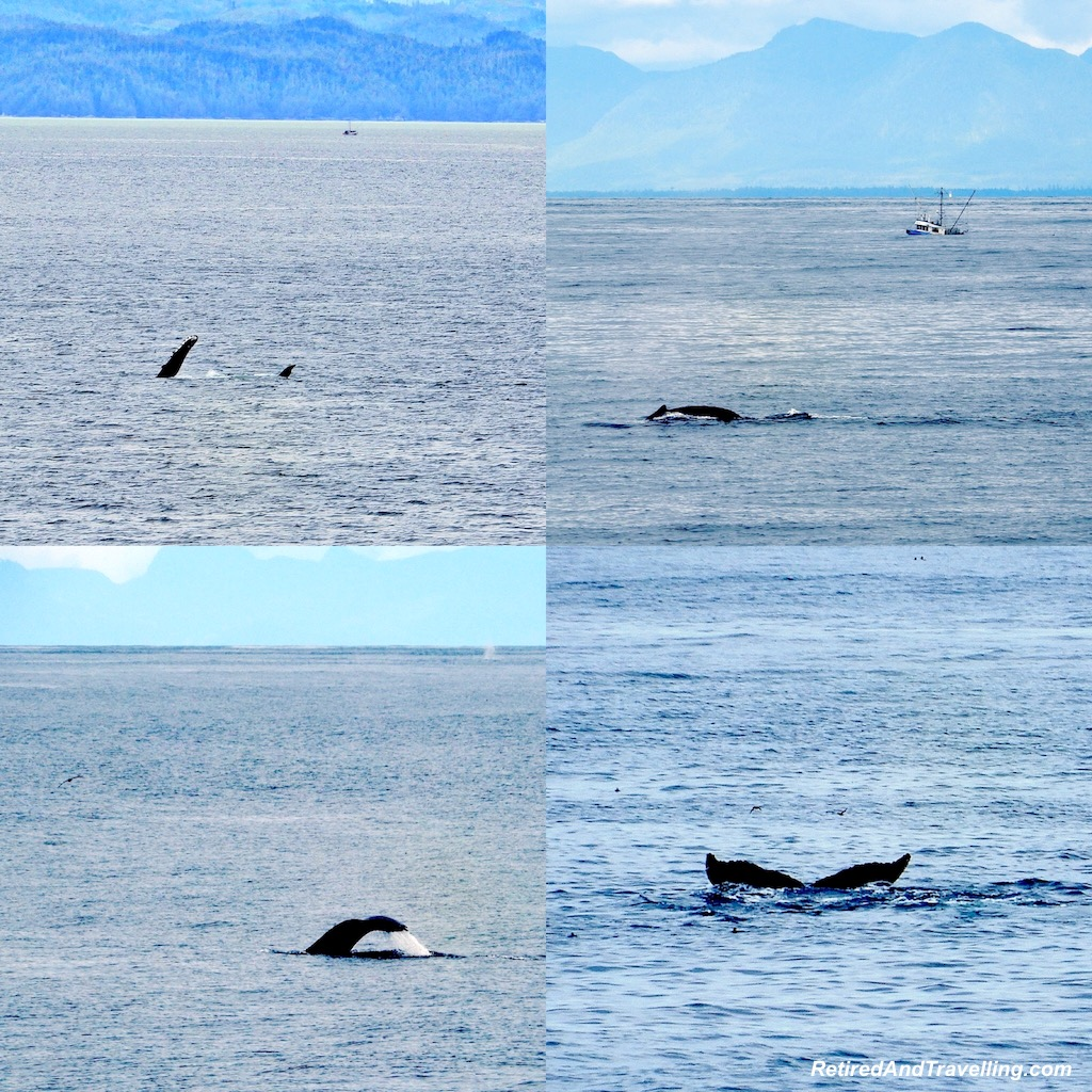 Whales Cruising the Outer Passage - Alaska Cruise From Seattle.jpg