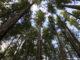 A Rainforest Excursion in Ketchikan.jpg