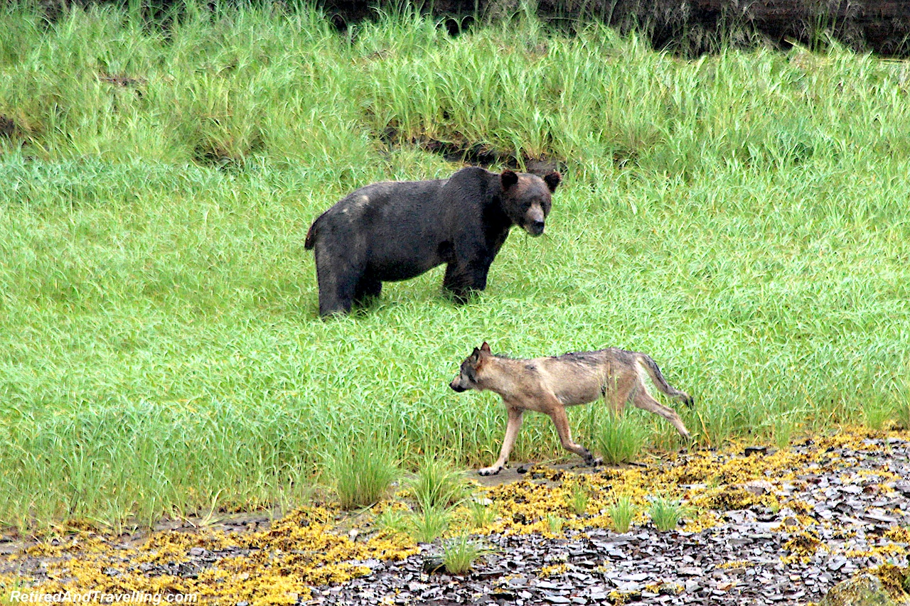 Prince Rupert Grizzly Bears Whales and Eagles - Alaska Cruise From Seattle.jpg