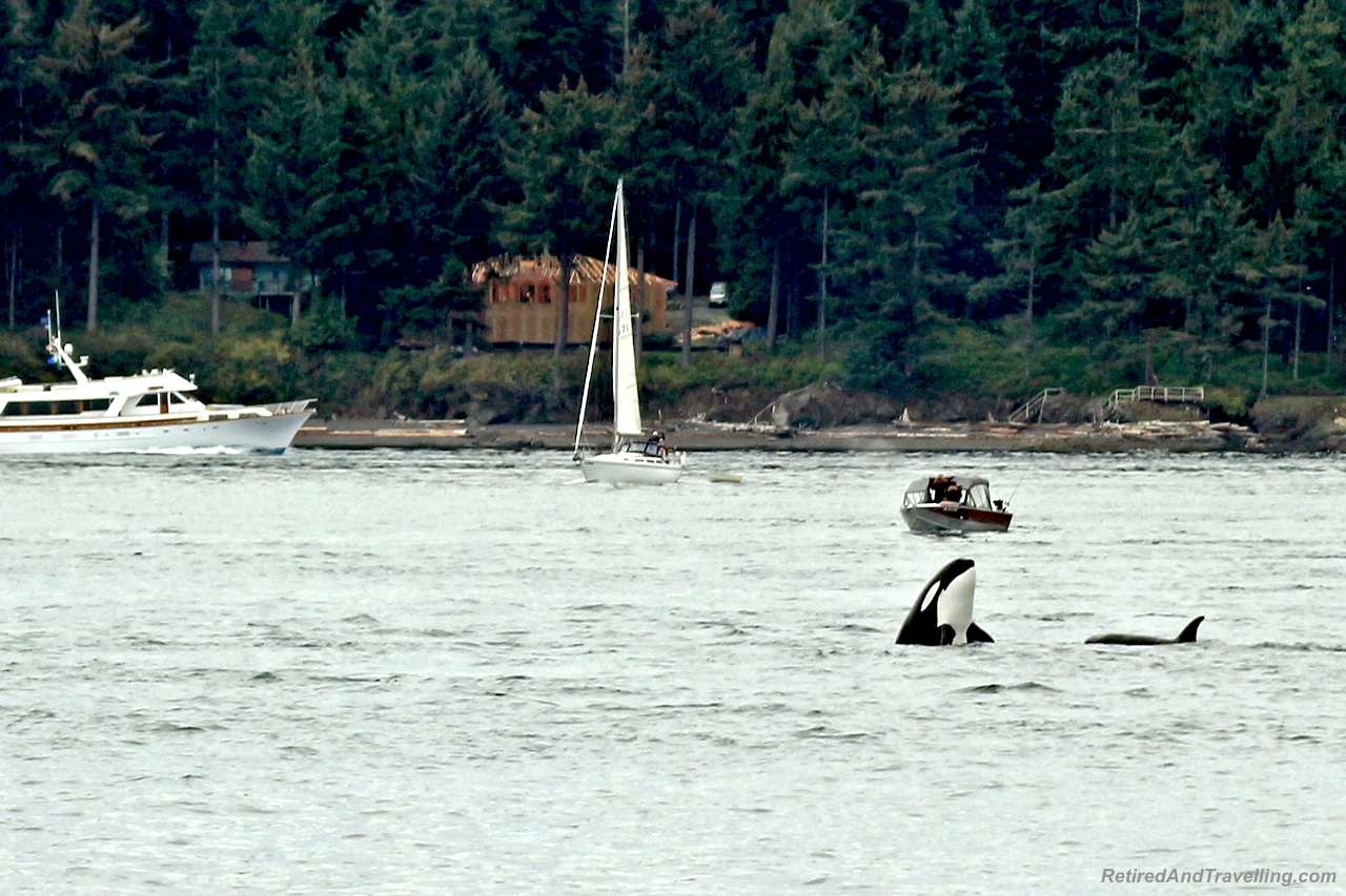 Orca Whales - Vancouver Stop On An Alaska Cruise.jpg