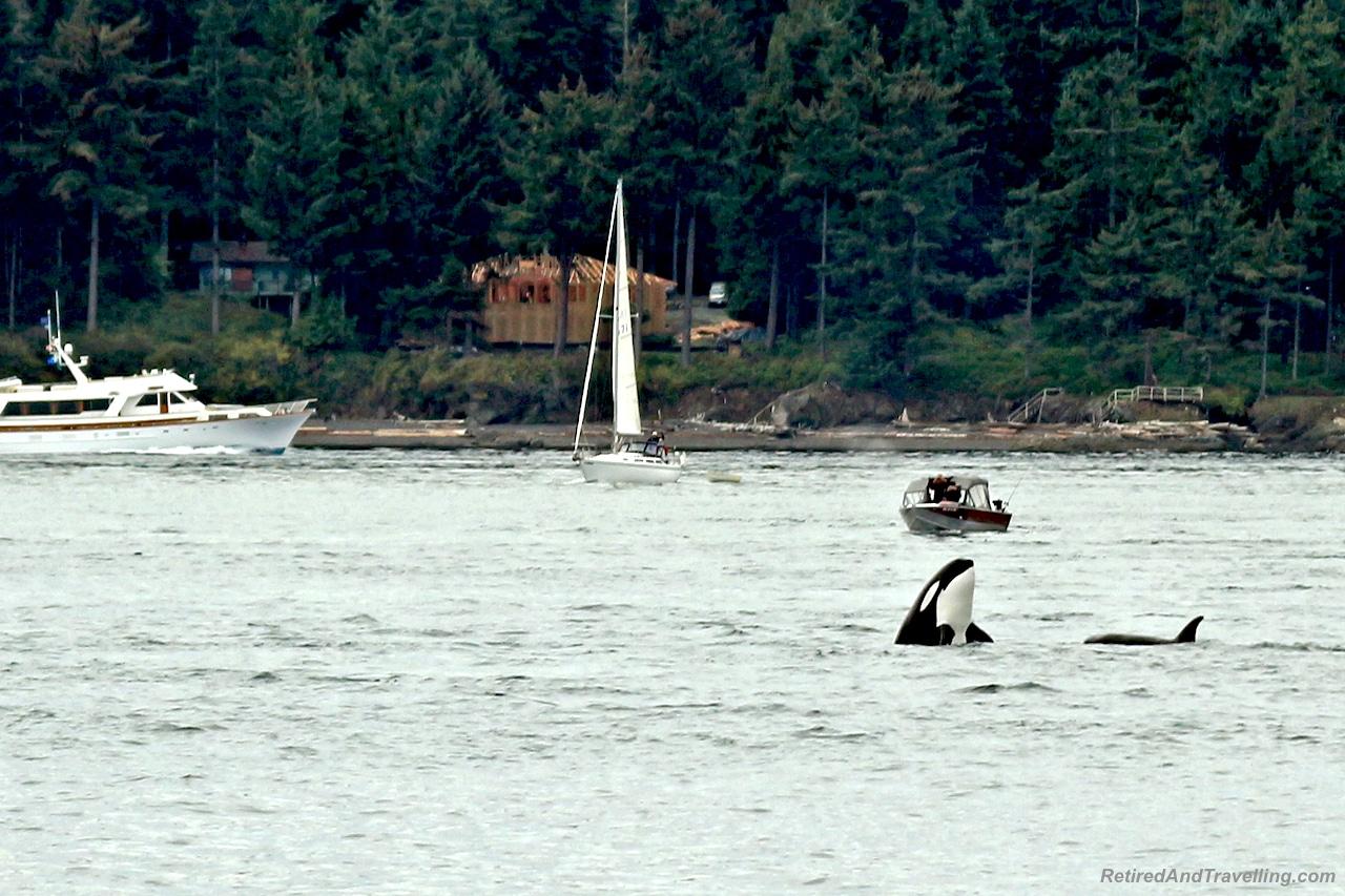 Orca Whales - Vancouver Stop On An Alaska Cruise.jpg
