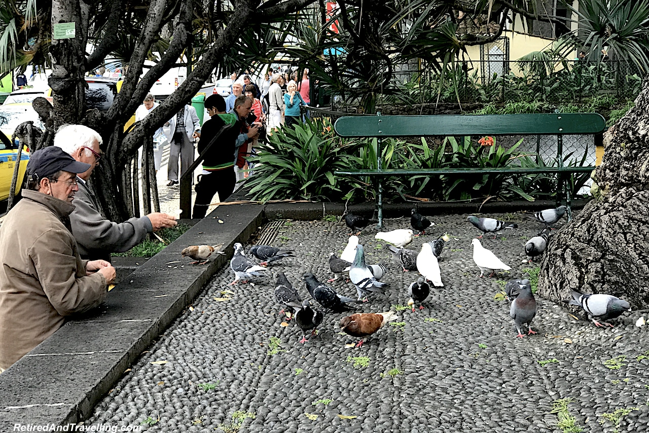 Funchal Town Park Pigeons - Hills and Valleys of Madeira.jpg