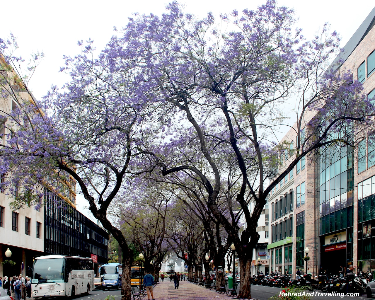Funchal Town Jacaranda Trees - Hills and Valleys of Madeira.jpg