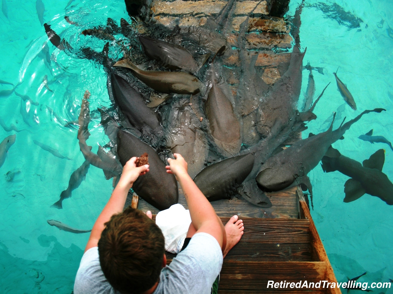 Feed Nurse Sharks - Water Fun in Bahamas.jpg