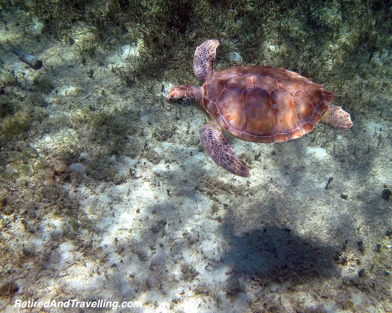 Snorkel Sea Turtles - Water Fun in Bahamas.jpg
