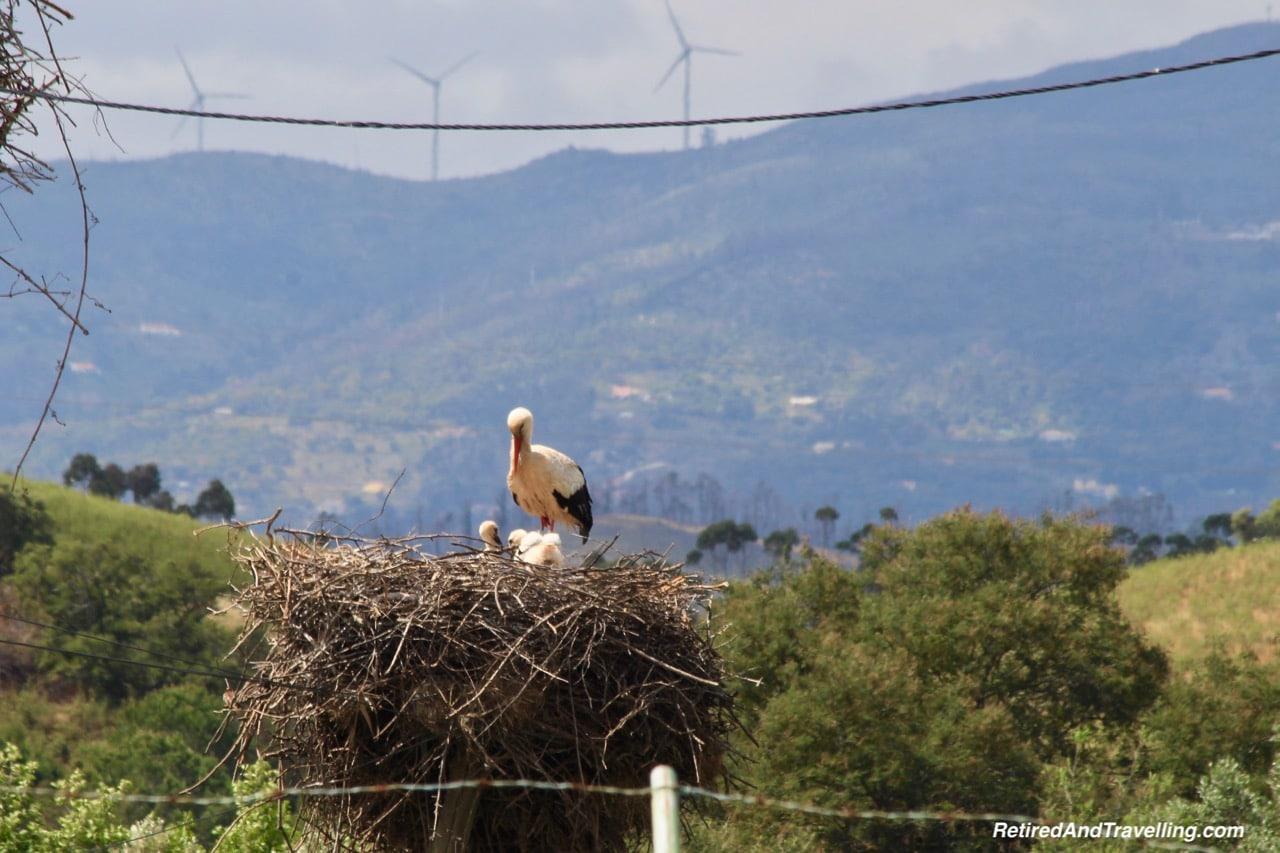 Birds On Poles - Algarve Mountains at Monchique.jpg