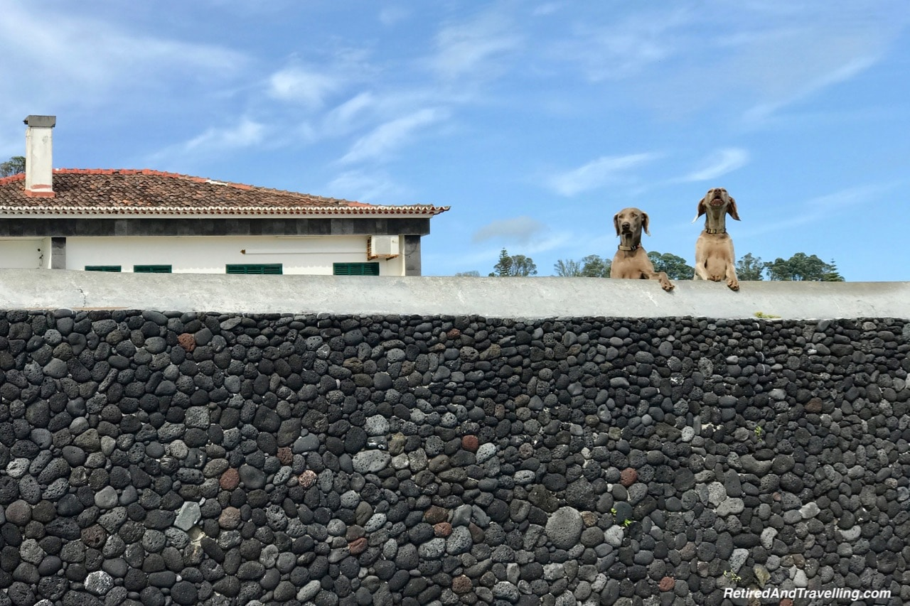 Agua de Pau Guard Dogs - Pounding Surf on Sao Miguel.jpg