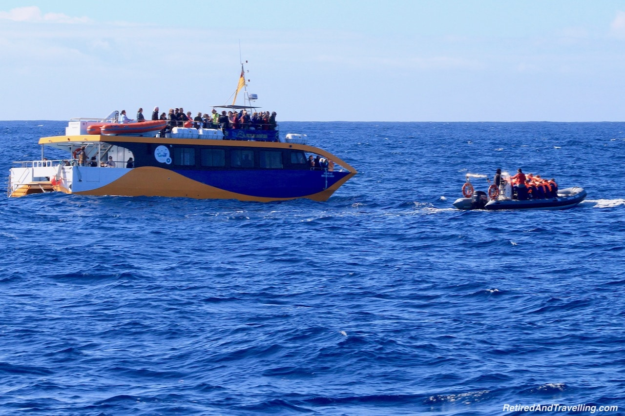 Whale Watching - Explore Sao Miguel From Ponta Delgada.jpg