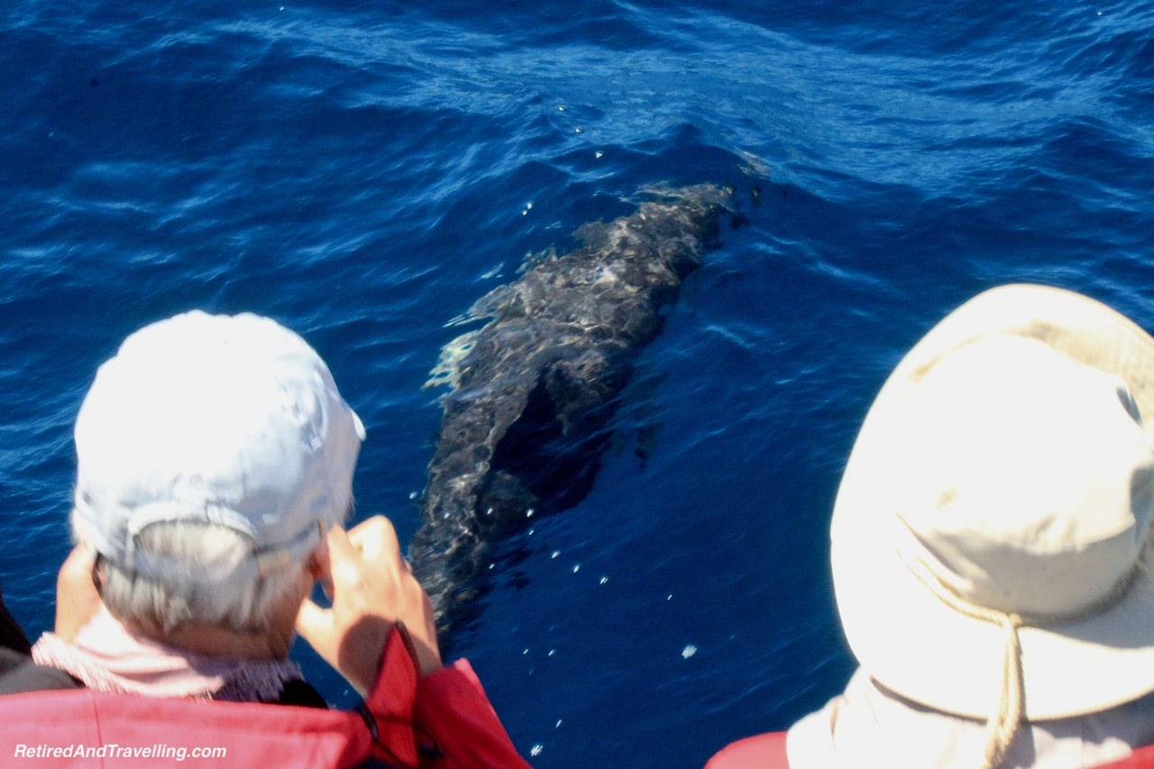 Azores Sao Miguel Dolphin Watching - Whale Watching From Sao Miguel.jpg