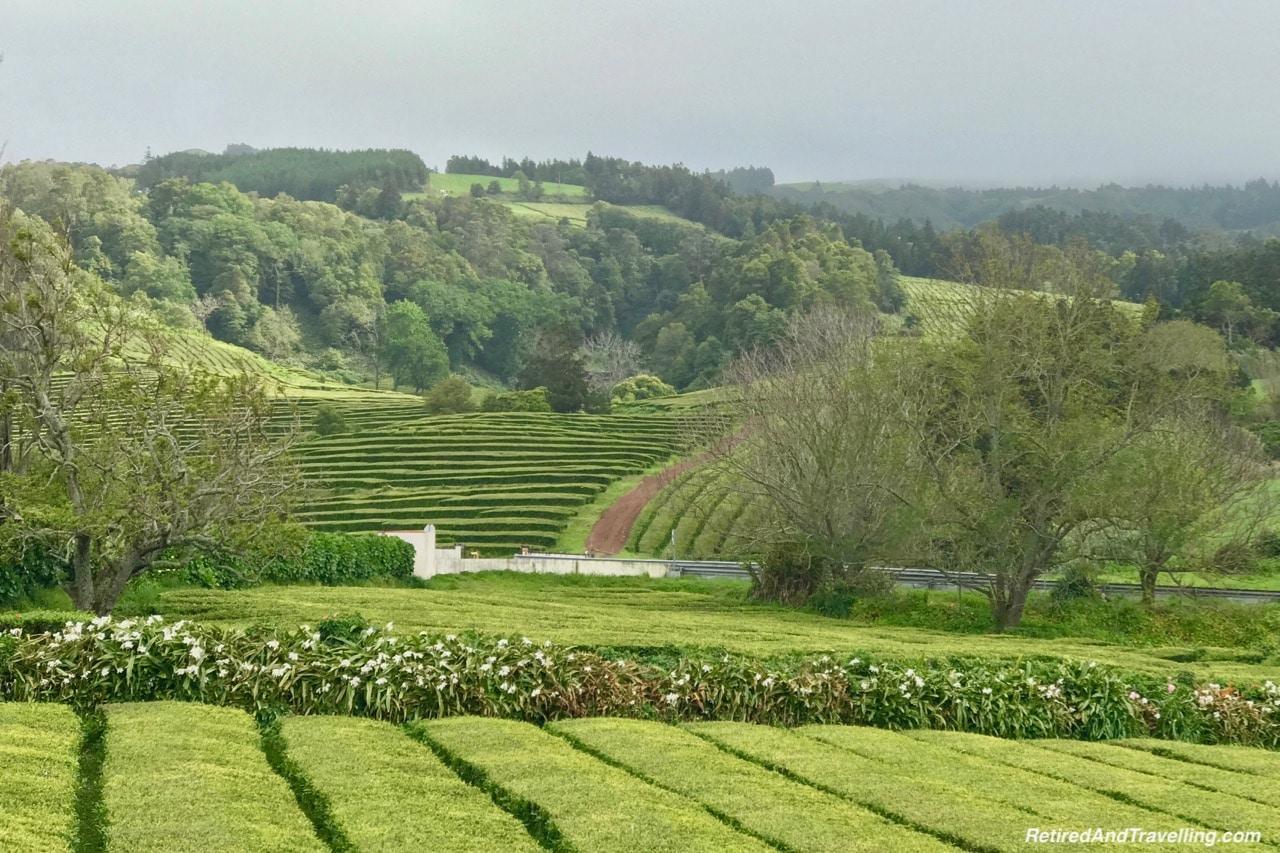 Cha Gorreana Tea Fields - Explore Sao Miguel From Ponta Delgada.jpg