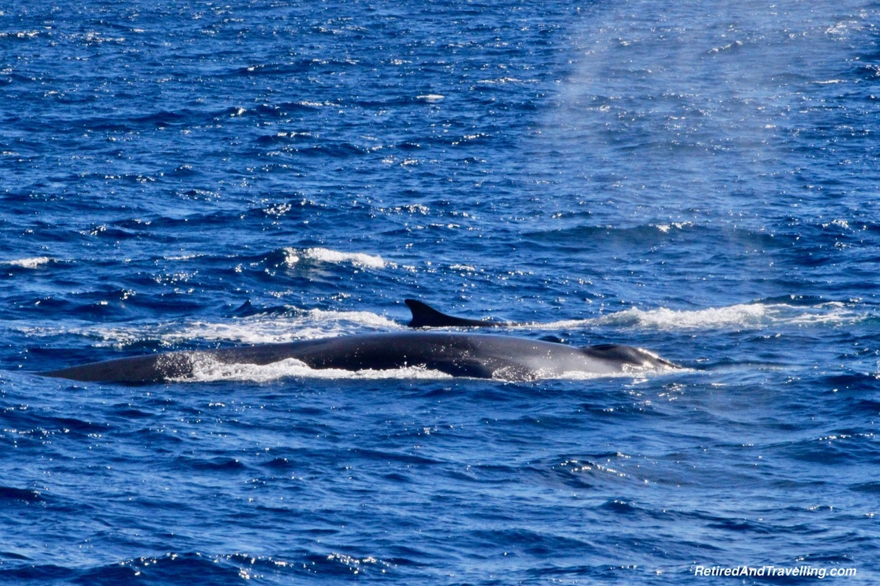 Sao Miguel Fin Whales - Whale Watching From Sao Miguel.jpg