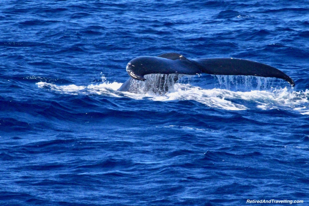 Azores Sao Miguel Humpback Whales - Whale Watching From Sao Miguel.jpg