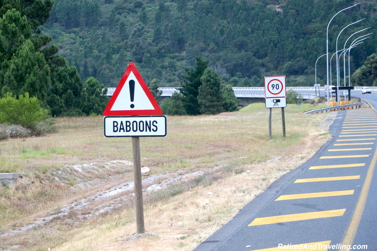 Baboons Animal Encounters - Reasons To Visit Cape Town.jpg