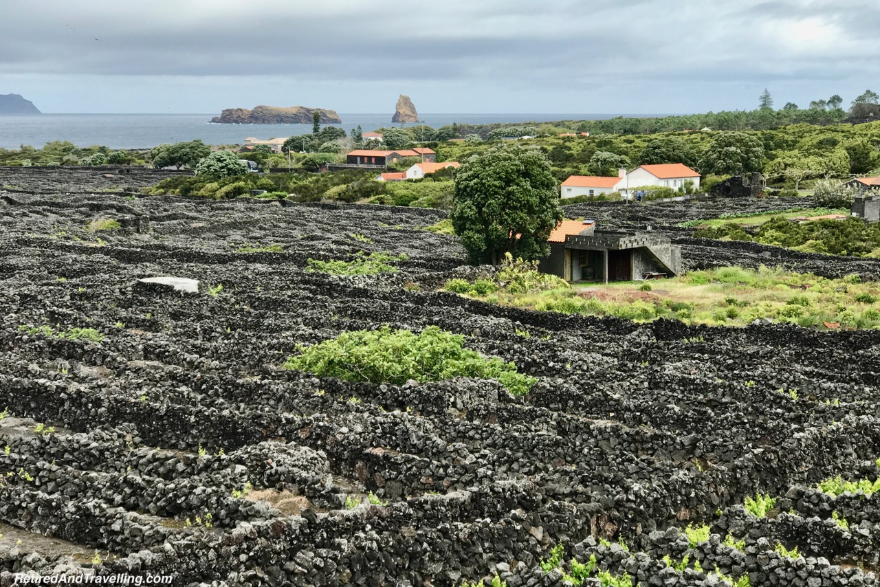 Azores Pico Island Wines - 10 Days In the Azores.jpg