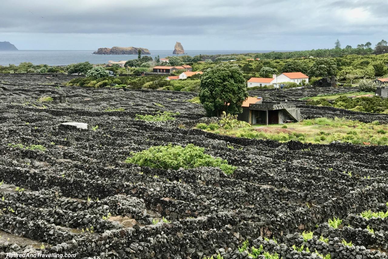 Criacao Velha Vinyards - Historical Perspective of Pico Island.jpg