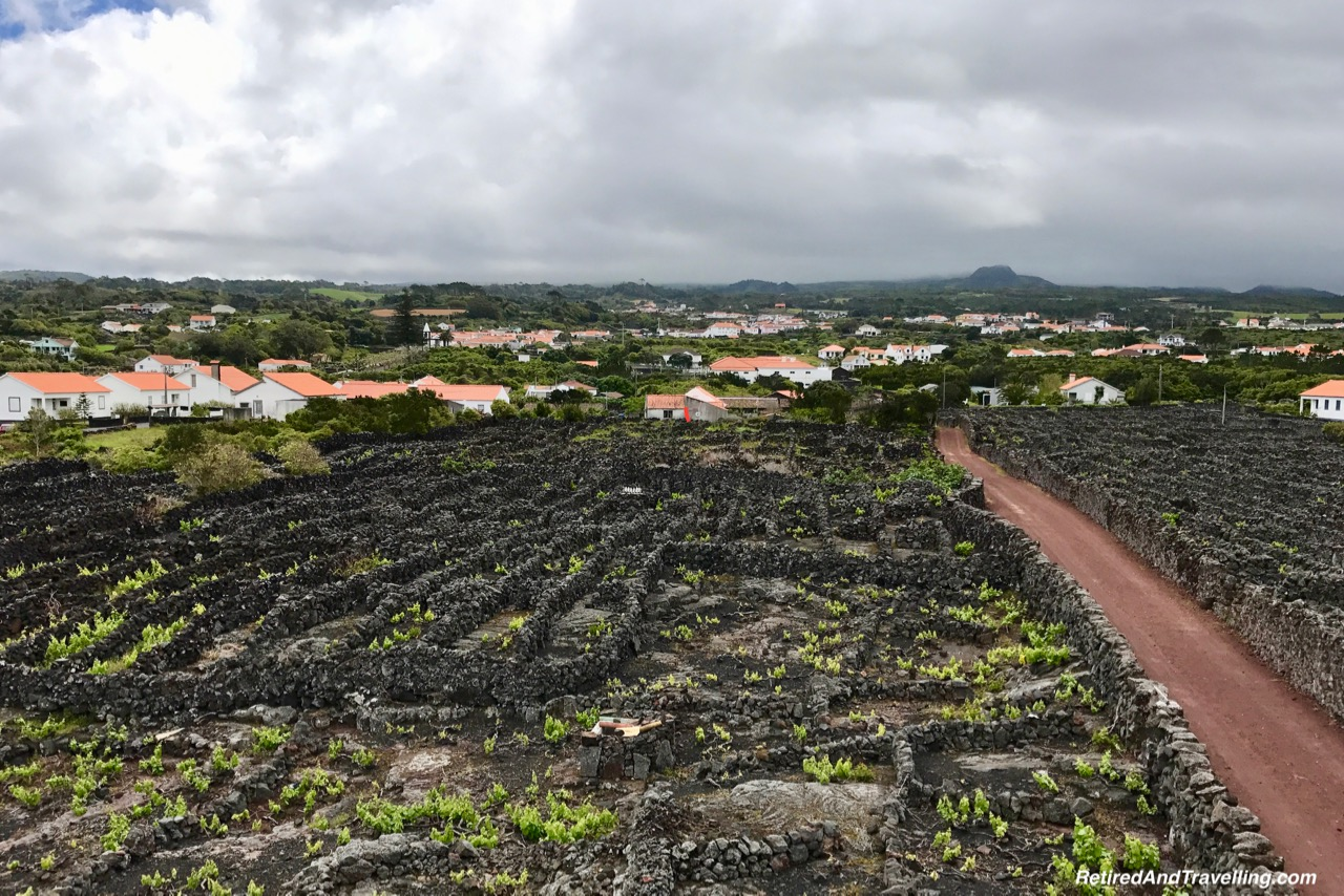 Azores Pico Island Wine - Stay on Faial Island Azores.jpg