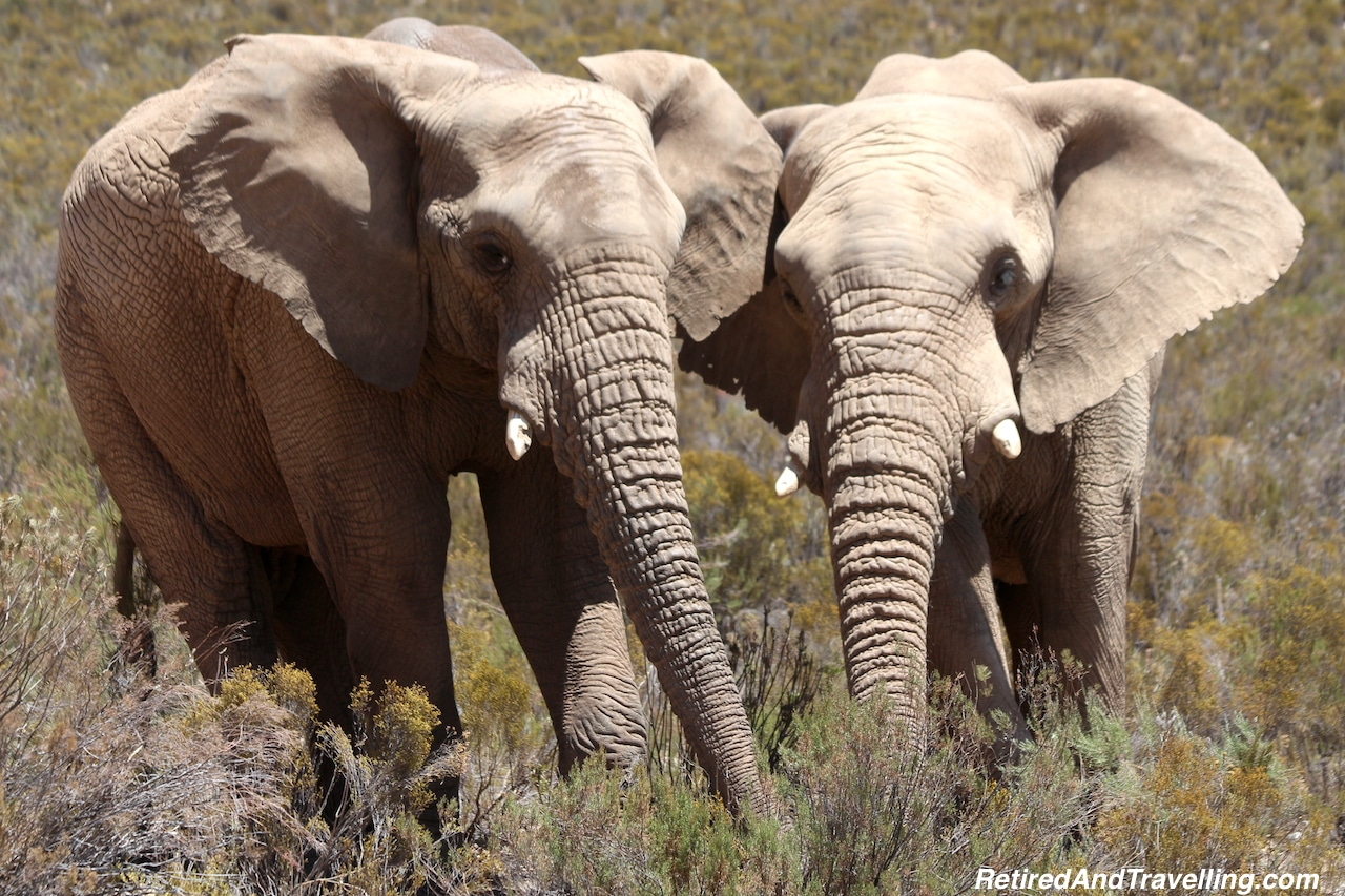 Elephant Animal Encounters - Reasons To Visit Cape Town.jpg