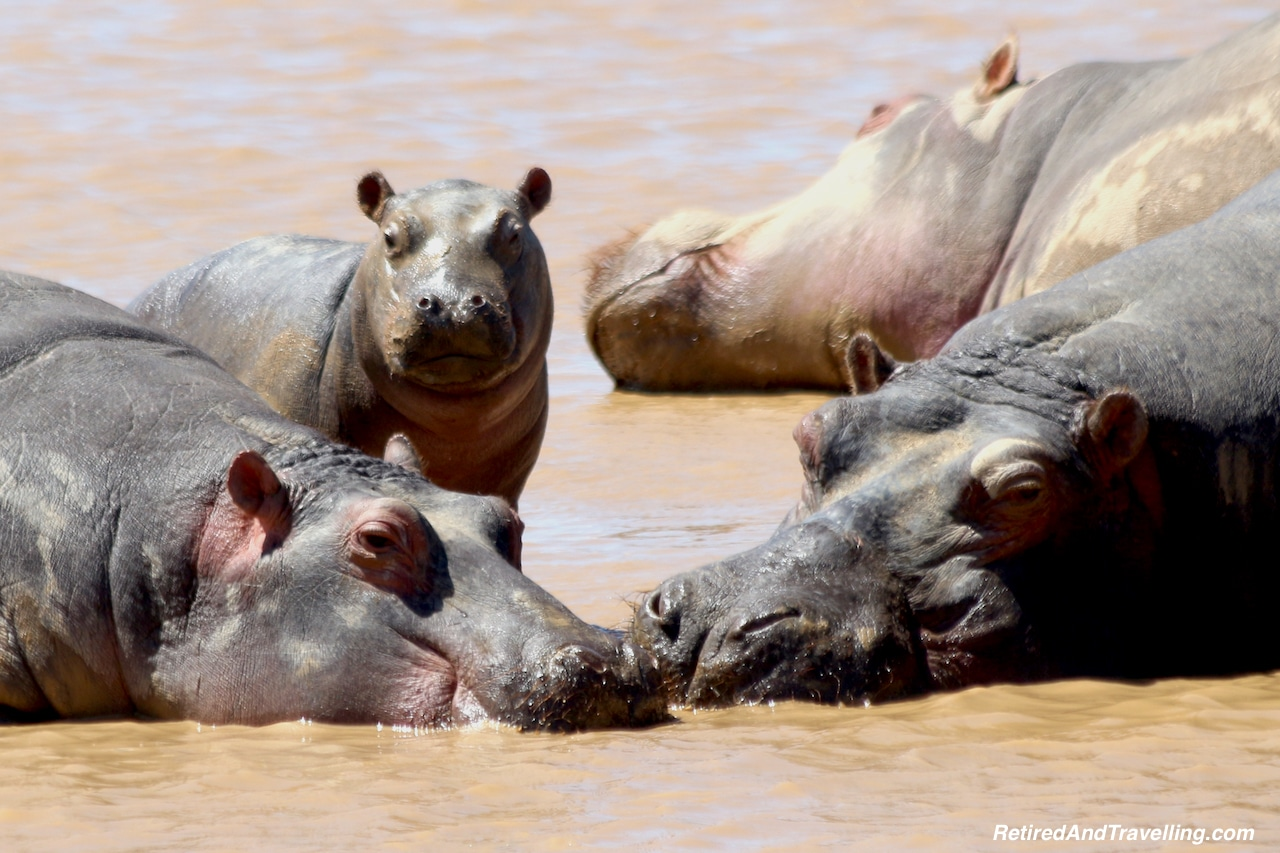 Hippo Animal Encounters - Reasons To Visit Cape Town.jpg
