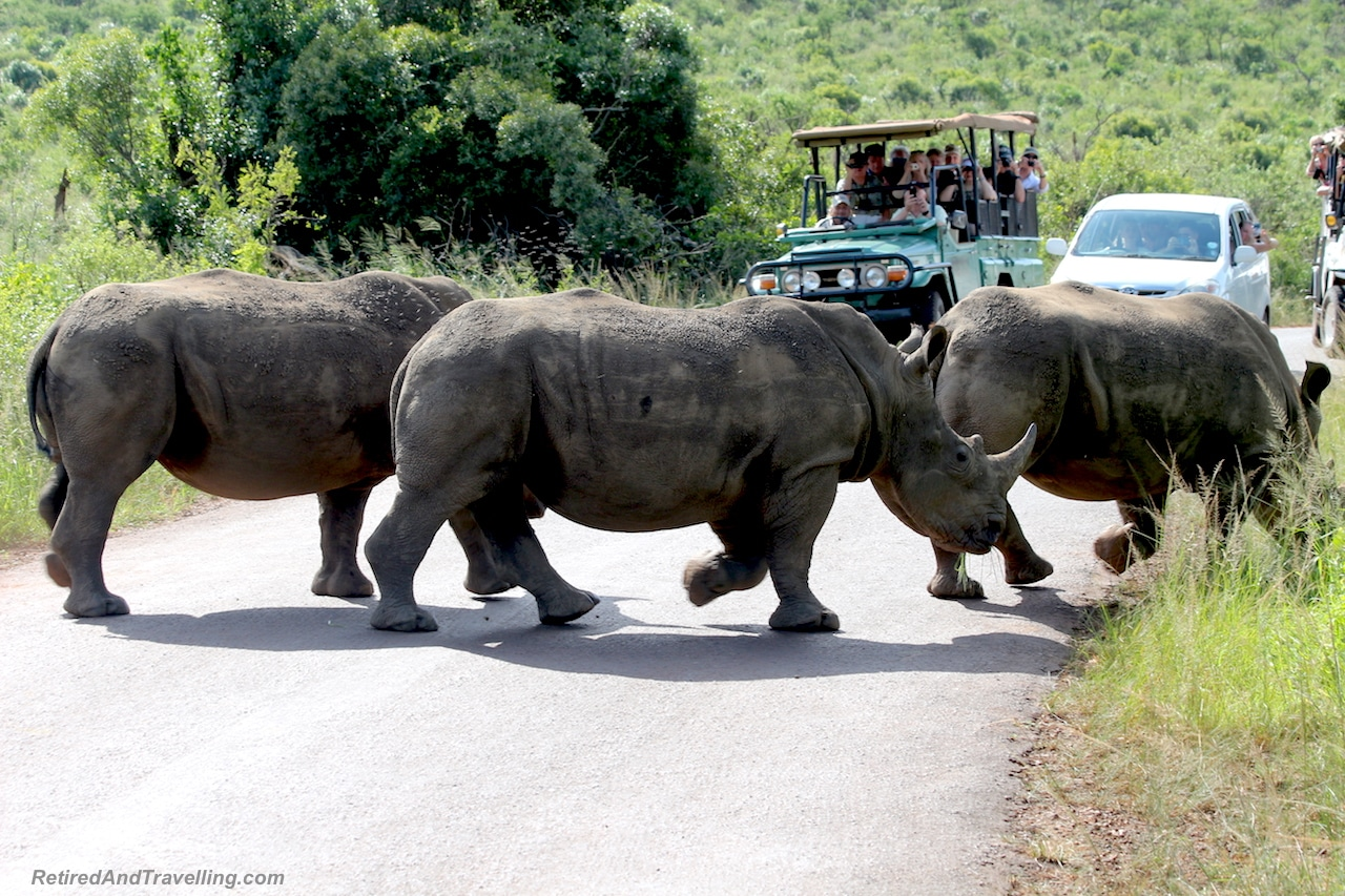 Wild Animal Game Drives Cruise Port Stop - Ready For An Around The World Cruise.jpg