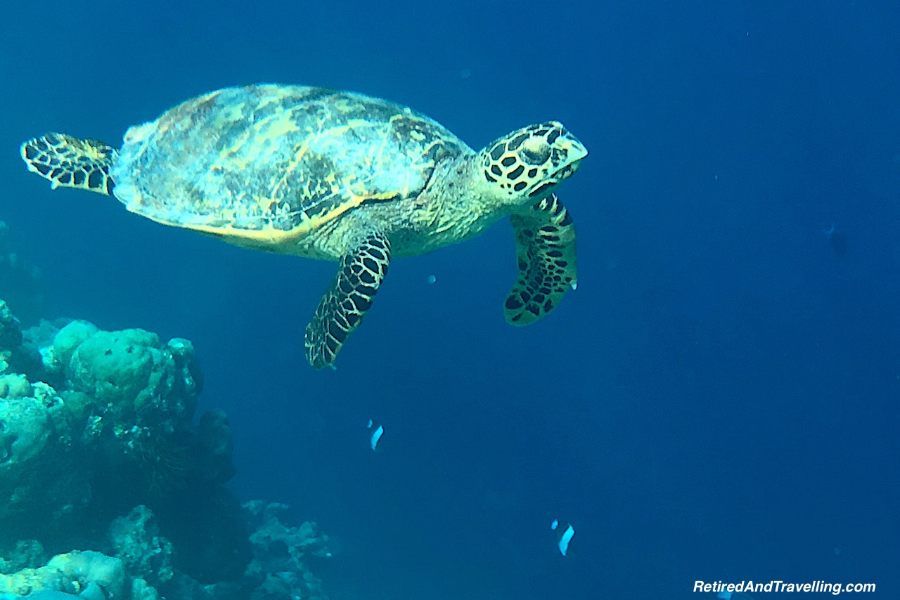 Maldives Snorkel Cruise Port Stop - Ready For An Around The World Cruise.jpg