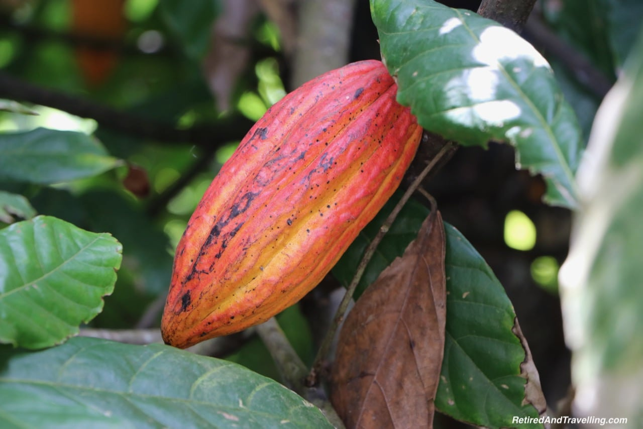Boucan Hotel Chocolat Cacao Tour Cacao Pods - Make Chocolate In St. Lucia.jpg