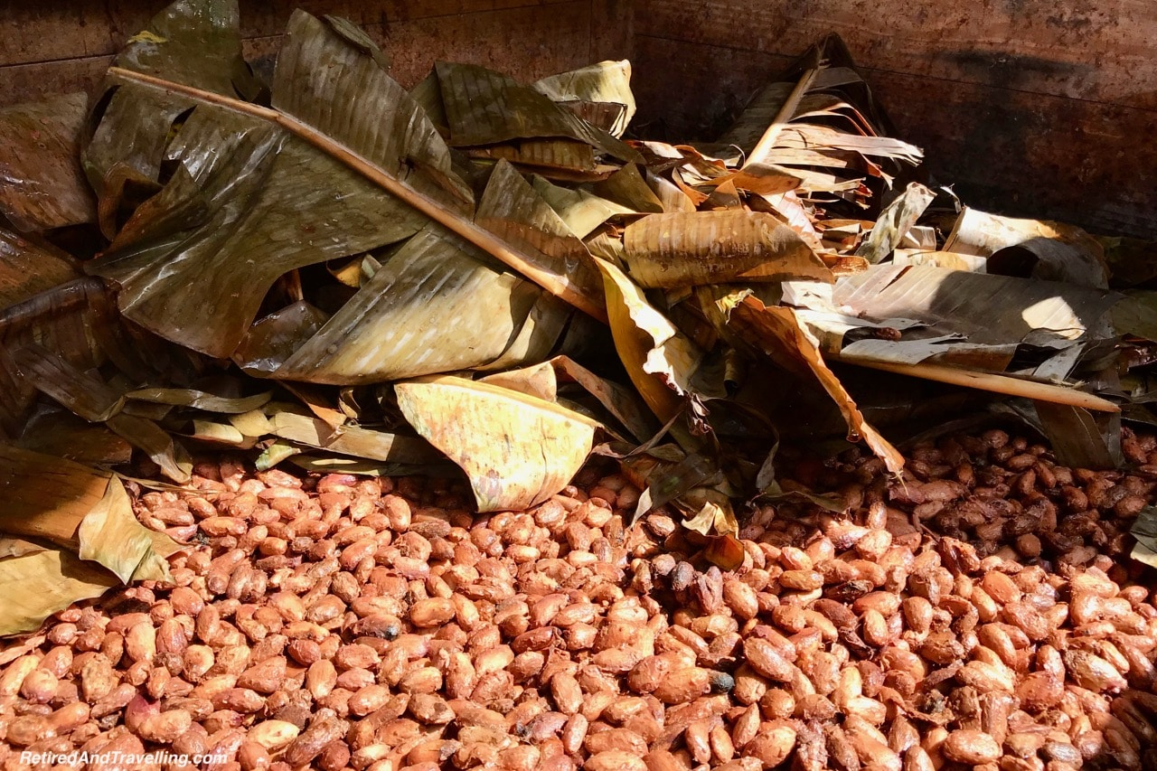 Boucan Hotel Chocolat Cacao Tour Cacao Bean Fermenting - Make Chocolate In St. Lucia.jpg