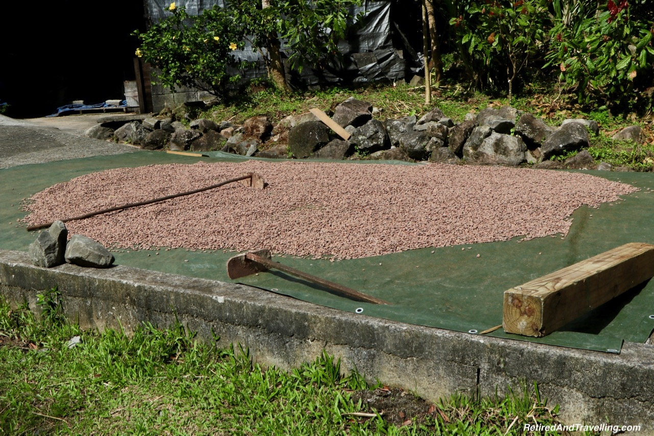 Boucan Hotel Chocolat Cacao Tour Cacao Bean Drying - Make Chocolate In St. Lucia.jpg