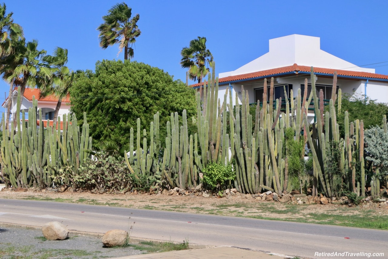 Aruba Cactus Everywhere - Excursion To Explore Aruba.jpg
