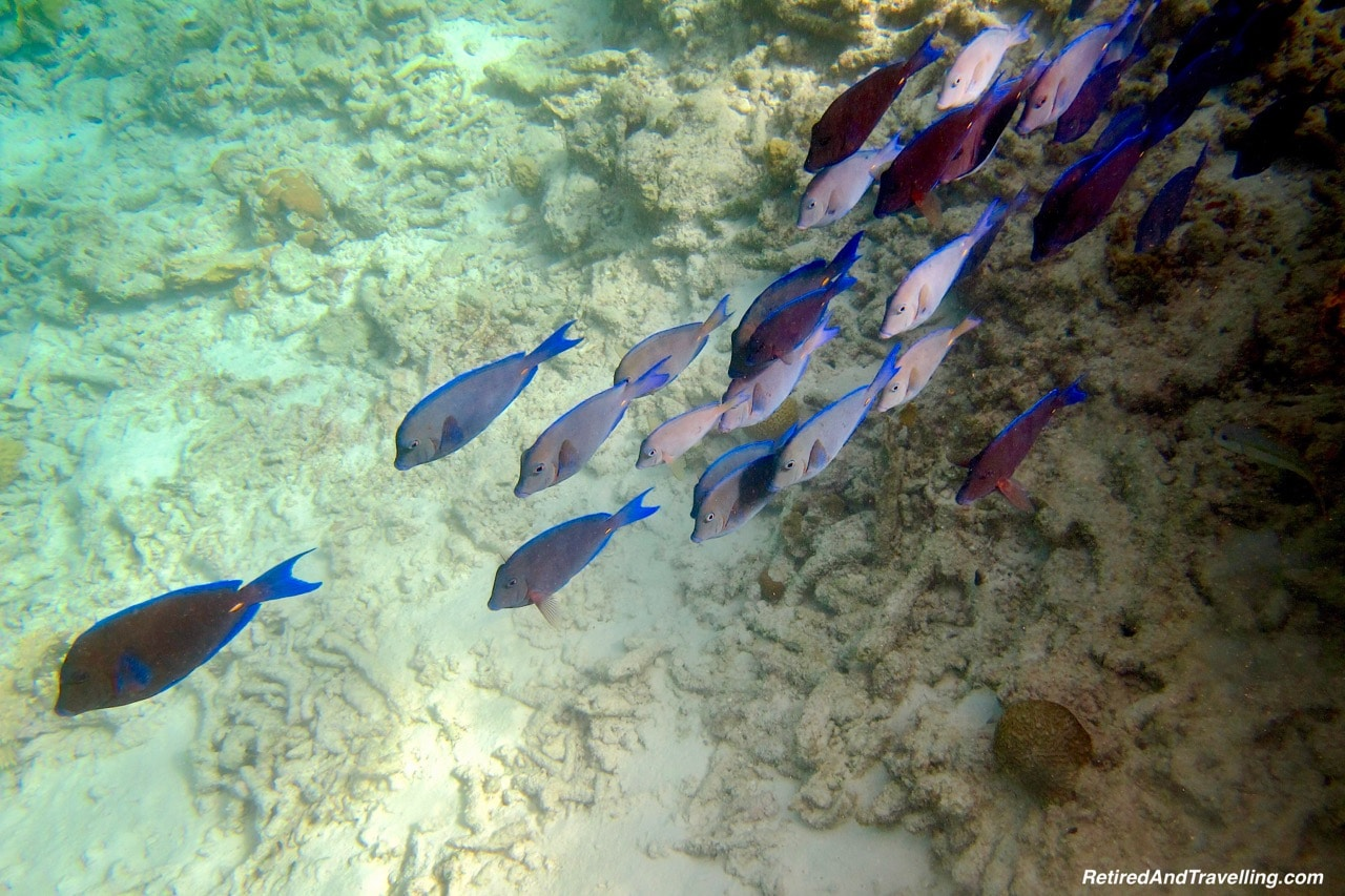 Don't Miss A Chance To Head Underwater In Bonaire