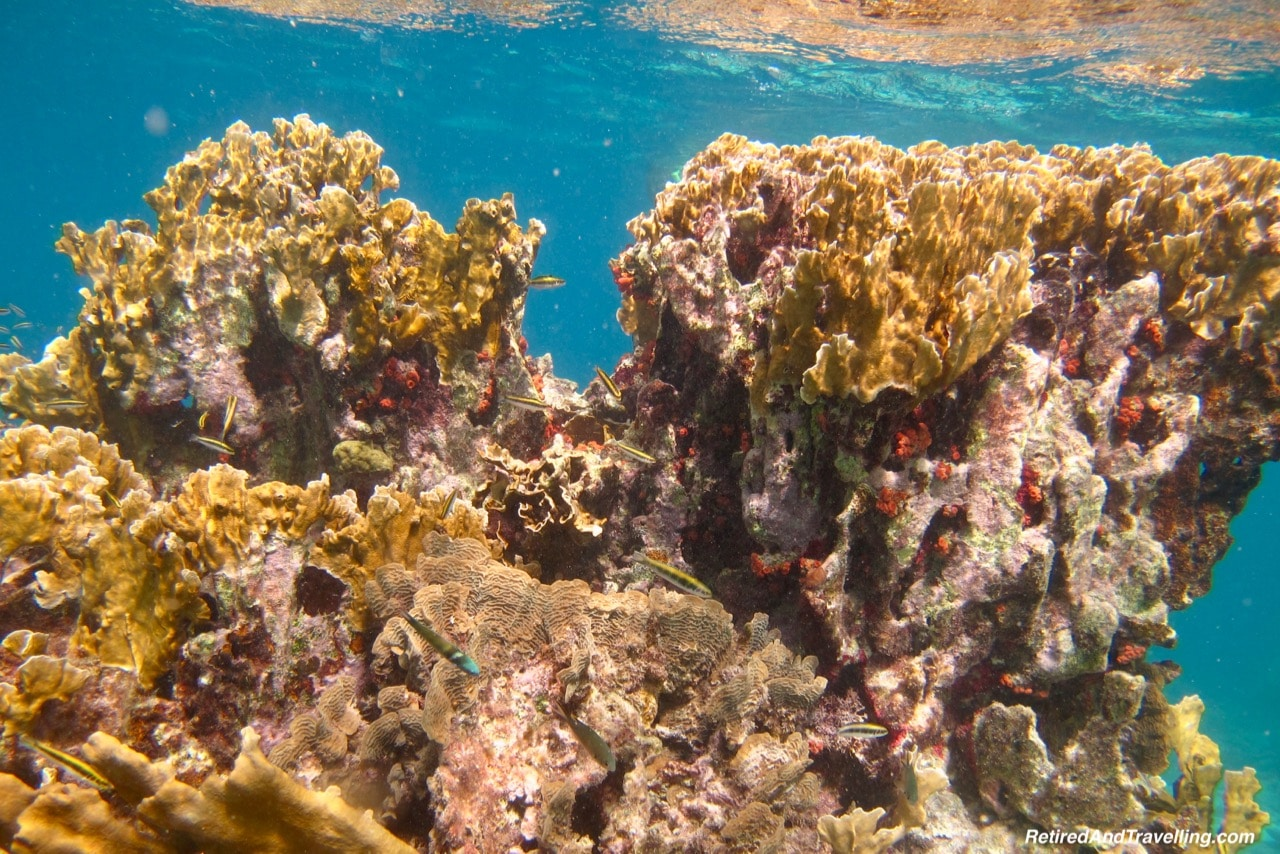 Klien Bonaire Beach Snorkel Colourful Coral - Visit The ABC Islands.jpg