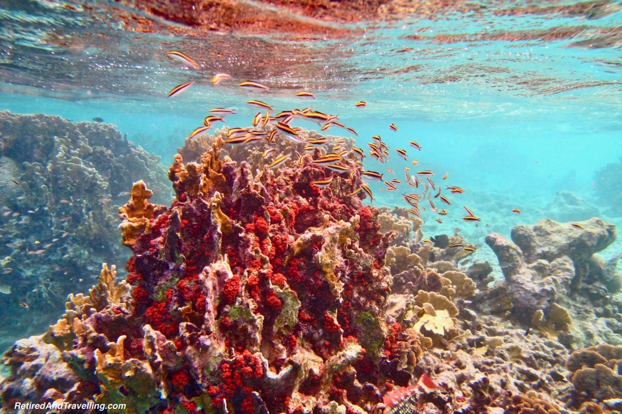 Klien Bonaire Beach Snorkel Colourful Coral - Head Underwater In Bonaire.jpg