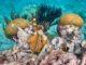 Head Underwater In Bonaire.jpg
