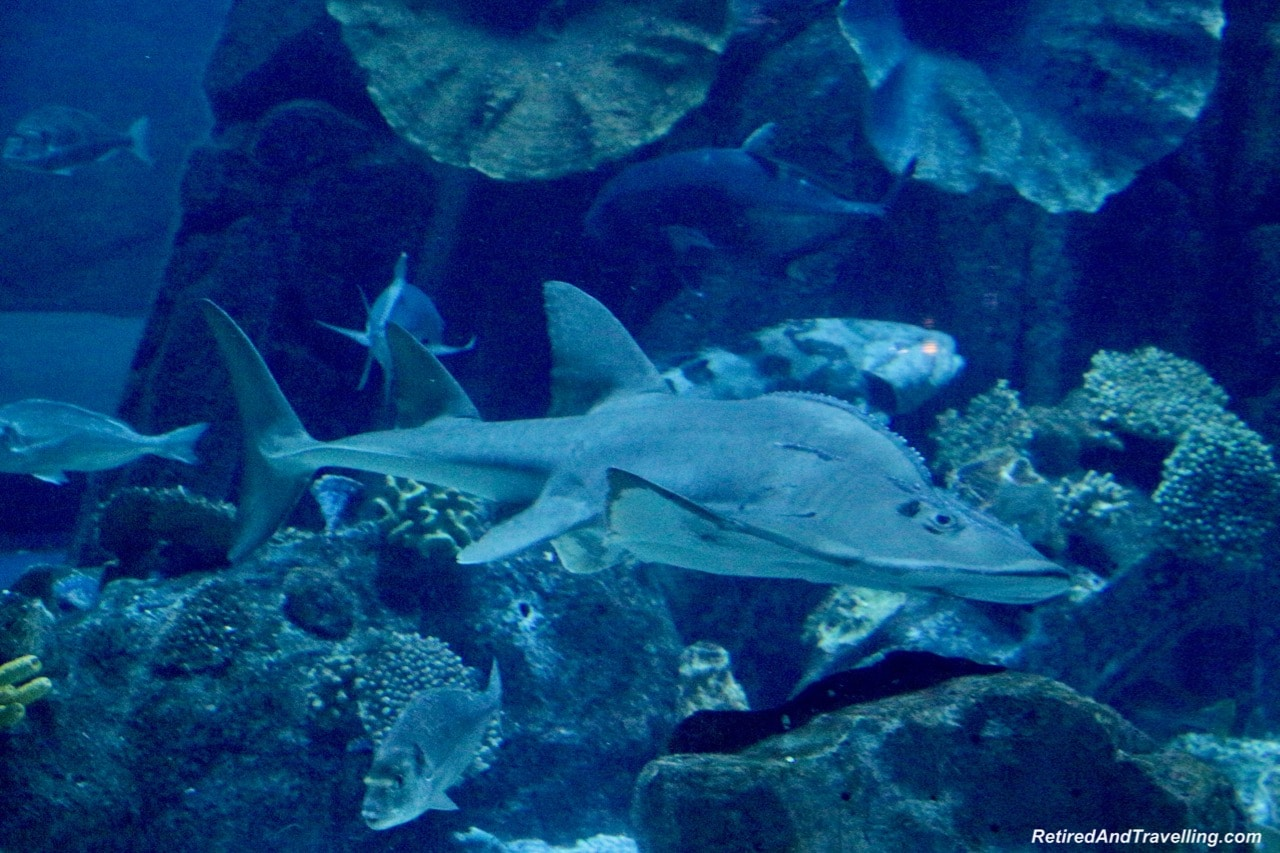 Aquarium Shark - Dubai Mall Adventure.jpg